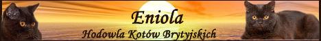 hodowla kotow brytyjskich Eniola